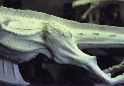 Close-up of Smirkenorff's hind legs.