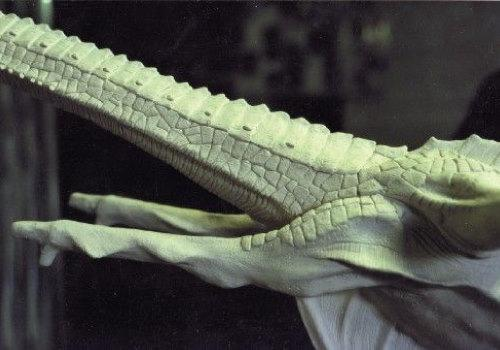 Close up of Smirkenorff's front legs and long neck.